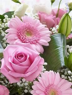 Collection Images Les Plus Belles Fleurs Du Monde