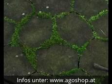 moos steinen entfernen ago quart algen und moos entfernen