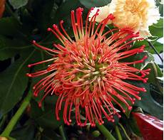 flower flickr photo