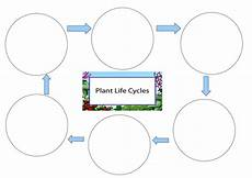 life cycle of a plant worksheet teaching resources