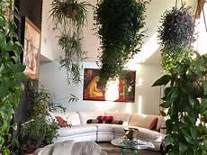 surviving winter with an indoor garden finegardening