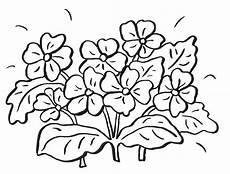 Ausmalbilder Zum Ausdrucken Kostenlos Blumen Blumen Malvorlage Blumen Ausmalbilder Ausmalen