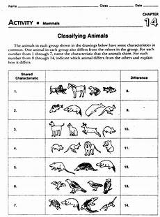 animal kingdom worksheets for kindergarten 14201 animal worksheet new 559 animal diversity worksheet
