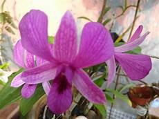 Terkeren 13 Bunga Anggrek Flowering Gambar Bunga Hd