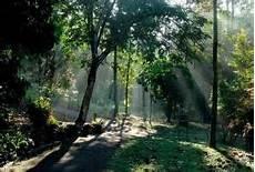Kisah Hutan Di Tengah Bandaraya Kuala Lumpur Astro Awani
