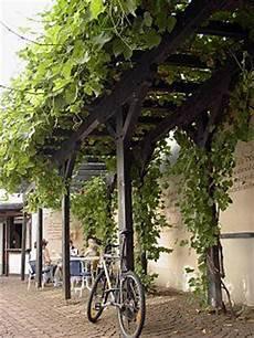 Grapevines On Pergolas Arbours Carports