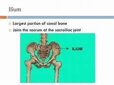 ppt pelvic lower limbs p 158 161 powerpoint presentation id 1898161