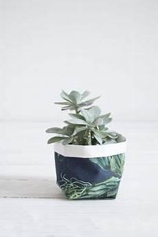 pflanzen günstig die 338 besten bilder wohnen mit zimmerpflanzen