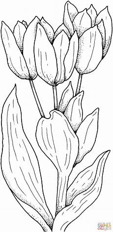 Malvorlagen Free Tulips Flower Coloring Page Free Printable Coloring Pages