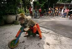 Topeng Monyet Ronggeng Monyet Original Indonesia