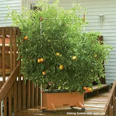Gardening Systems by Earthbox 174 Home Of The Original Container Gardening System