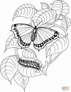 caterpillar and butterfly 4 coloring page free printable