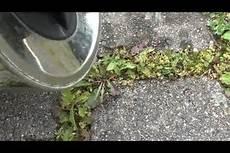 unkraut auf terrasse entfernen