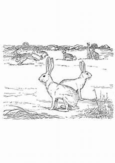 Ausmalbilder Natur Tiere Ausmalbild Hasen In Der Natur Zum Ausdrucken