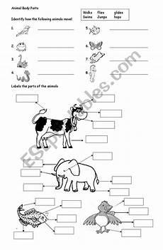 animal parts worksheets esl 14296 animal parts esl worksheet by ameeyupe