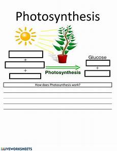 plants and photosynthesis worksheets 13616 photosynthesis worksheet