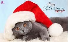 47 cute merry christmas wallpaper wallpapersafari