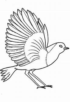 Malvorlagen Wings List Birds Robin Bird Coloring Page