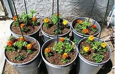 coltivare in vaso coltivare pomodori in casa in vaso sul balcone www