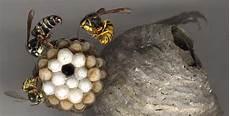 nid de guepes tarif enlever nid de guepe id 233 es d 233 coration id 233 es d 233 coration