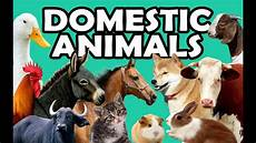 was sind haustiere domestic animals learn domestic animals sounds and names