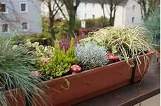 Balkonkasten Herbst Winter - herbst winterbepflanzung 2013 green planet