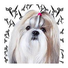 shih tzu haircuts teddy bear puppy lion cut and other