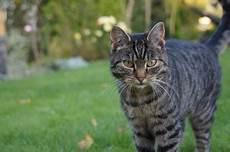 katzenabwehr die besten mittel gegen katzen in haus und