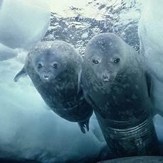 Unterwasser Tiere Malvorlagen Englisch Was Bedeutet Der Klimawandel F 252 R Die Tiere Im Meer