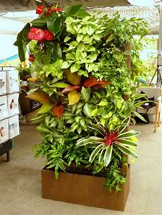 To Plant Vertical Garden by 10 Best Plants To Grow For Vertical Garden The Self