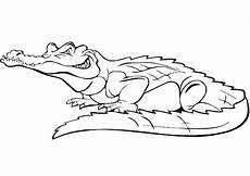 kostenlose malvorlagen krokodil krokodile zum ausmalen ausmalbilder krokodile ausmalen