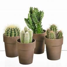 Plantes Et Arbustes Quot 4 Cactus Pots En Ceramique