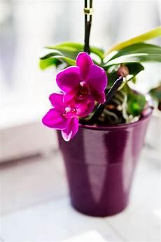 Echter Zimmerpflanze Kaufen - pink orchid 183 free stock photo