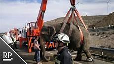 Spanien Zirkus Lkw Kippt Auf Autobahn Um Ein Elefant