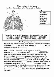 science worksheets respiratory system 12369 structure of the respiratory system teaching resources