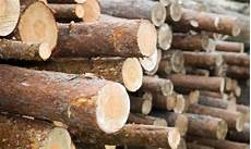 arbre en bois comment transformer vos arbres en bois d œuvre trucs