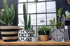 vos plantes vous diront merci diy un cache pot vintage