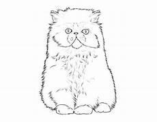 Ausmalbilder Siamkatze Kostenlose Malvorlage Katzen Katzenrassen Perserkatze