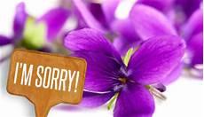 fiori per chiedere scusa fiori da regalare per chiedere scusa quando si ha davvero