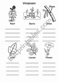 kinds of plants worksheets for grade 1 13700 plant parts for grade 1 esl worksheet by enashabib