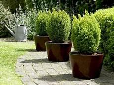 die hecke natuerlicher zaun und hecke im garten als sichtschutz eine variante zum zaun