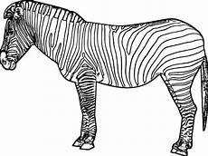 Bilder Zum Ausmalen Zebra Konabeun Zum Ausdrucken Ausmalbilder Zebra 26460