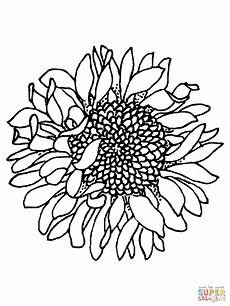 free sunflower coloring page free clip free