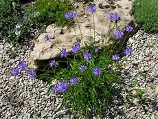 Plant Of The Month For January 2016 Ontario Rock Garden