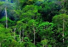 Pengurangan Emisi Dari Deforestasi Dan Degradasi Hutan