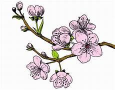 fleur de cerisier dessin branche fleurs de cerisier dessin