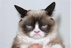 63 Gambar Kucing Lucu Ini Bakal Bikin Kamu Gemes