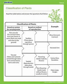 discovering plants worksheets grade 5 13532 classification of plants plants education plant classification 4th grade science