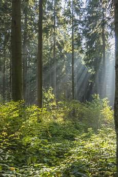 Gambar Pemandangan Pohon Alam Gurun Menanam Kabut