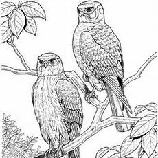 Ausmalbilder Erwachsene Vogel V 246 Gel Ausmalbilder F 252 R Erwachsene Kostenlos Zum Ausdrucken